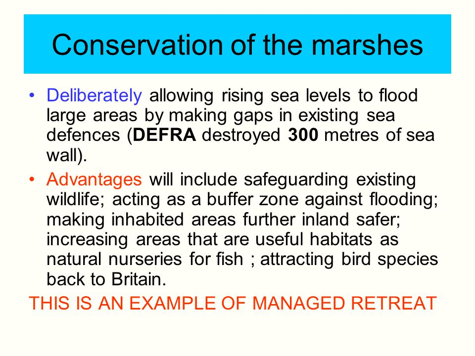 Conservation of the marshes