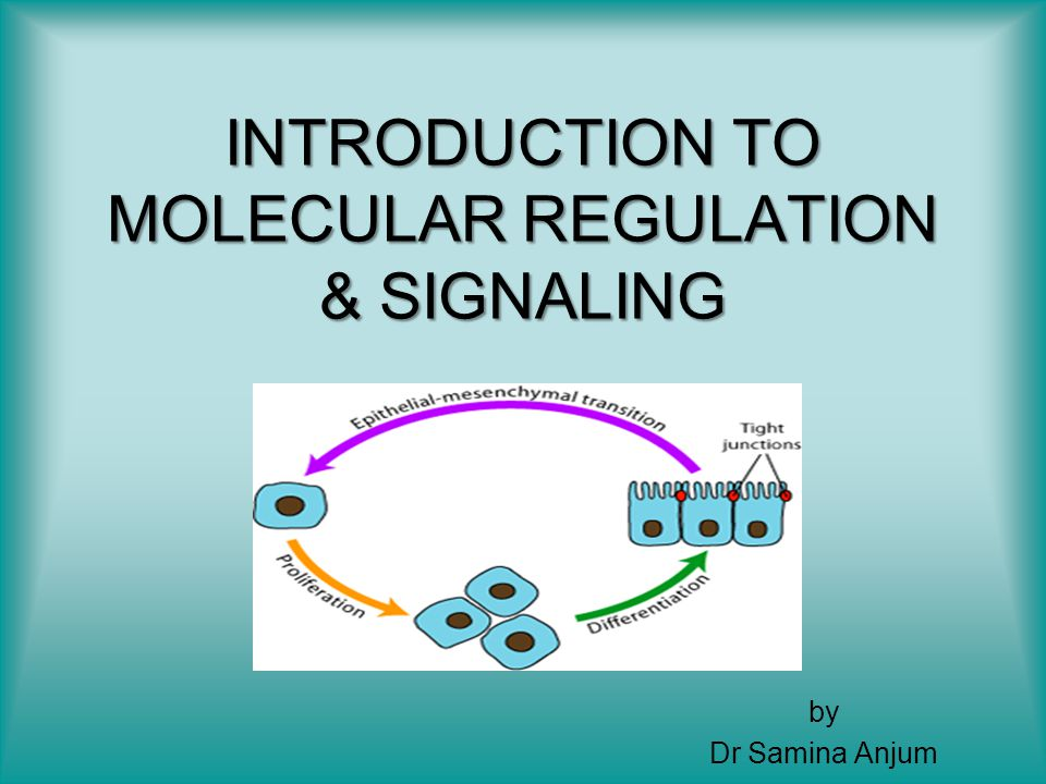INTRODUCTION TO MOLECULAR REGULATION & SIGNALING
