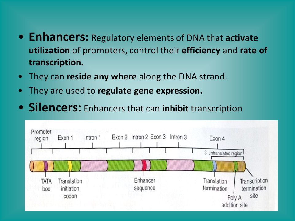 Silencers: Enhancers that can inhibit transcription