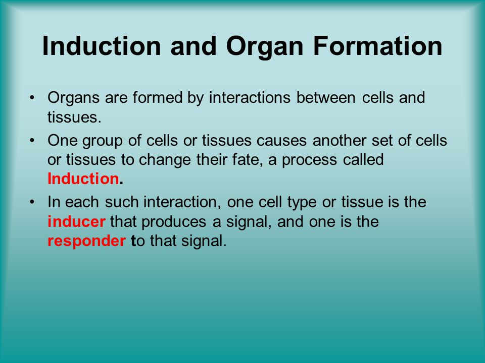 Induction and Organ Formation