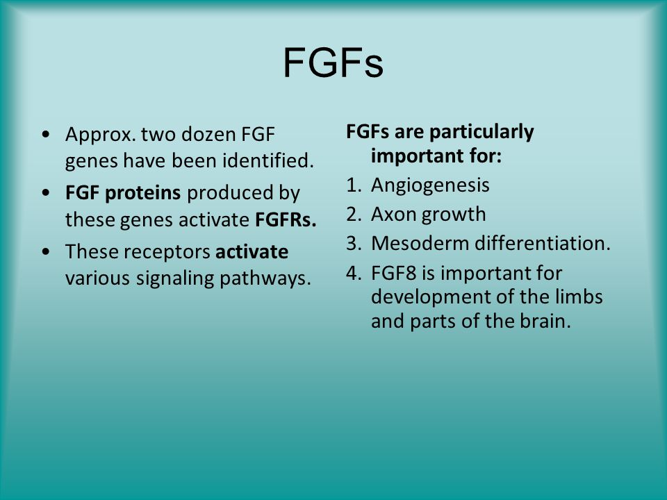 FGFs Approx. two dozen FGF genes have been identified.
