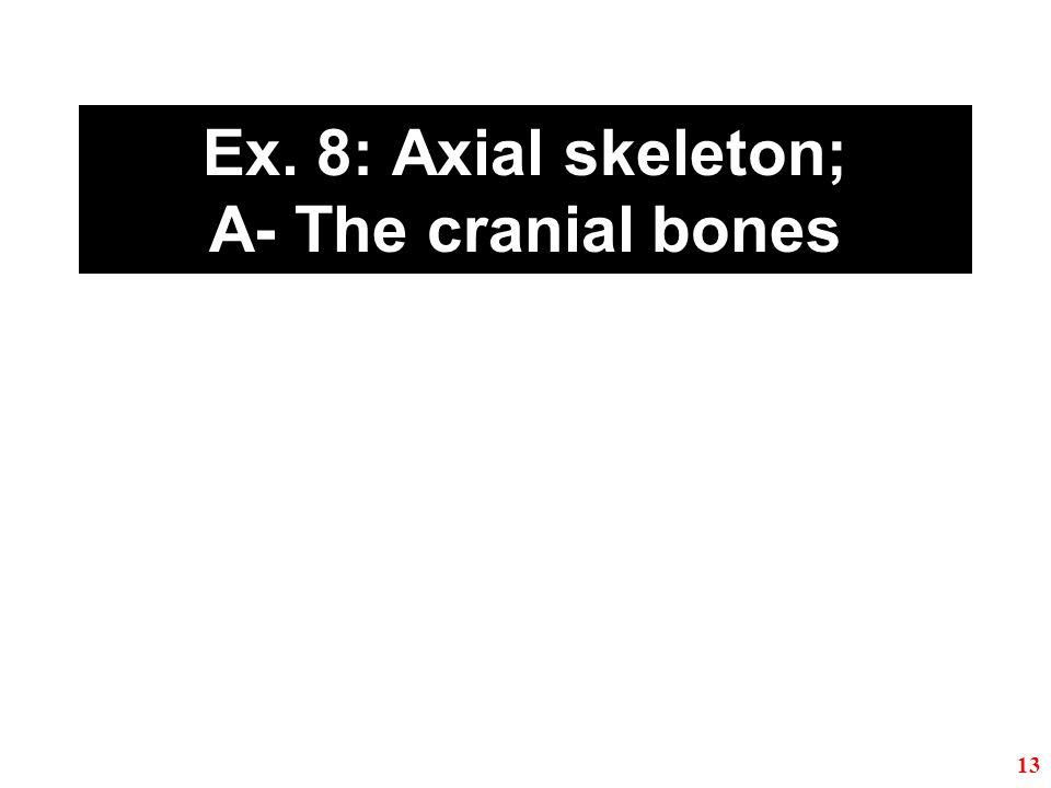 Ex. 8: Axial skeleton; A- The cranial bones