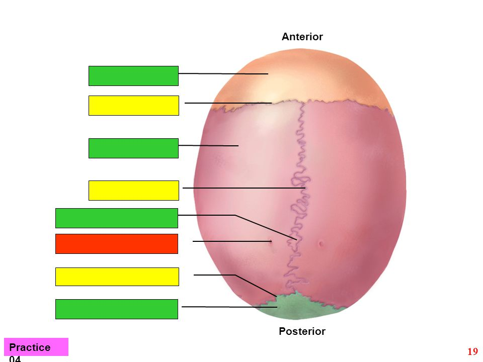 Anterior Posterior Practice 04 19