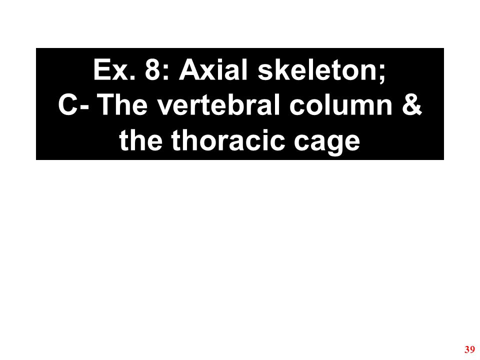 Ex. 8: Axial skeleton; C- The vertebral column & the thoracic cage