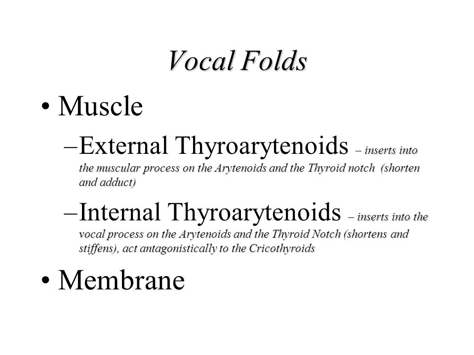 Vocal Folds Muscle Membrane