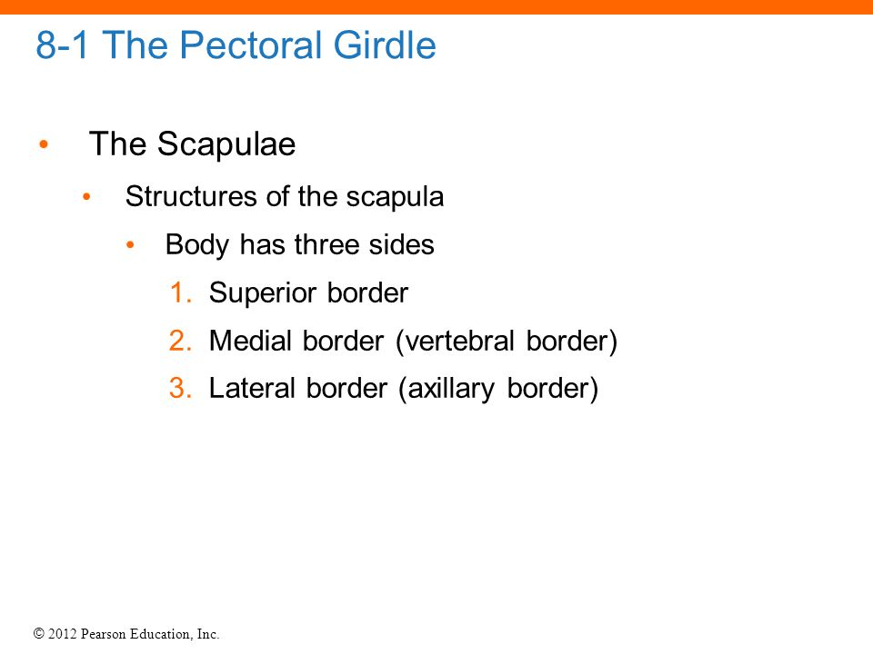 8-1 The Pectoral Girdle The Scapulae Structures of the scapula