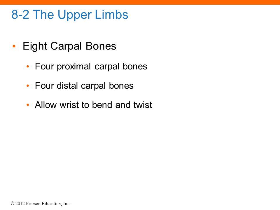 8-2 The Upper Limbs Eight Carpal Bones Four proximal carpal bones