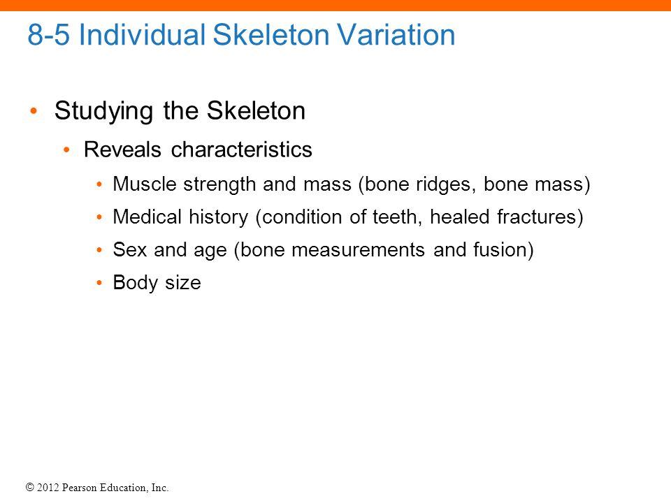8-5 Individual Skeleton Variation