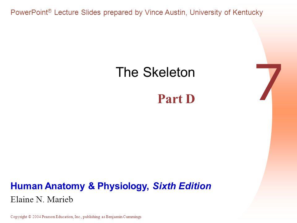 The Skeleton Part D 7