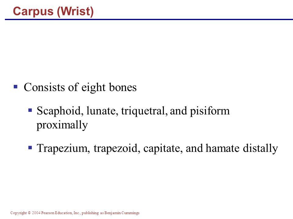 Consists of eight bones