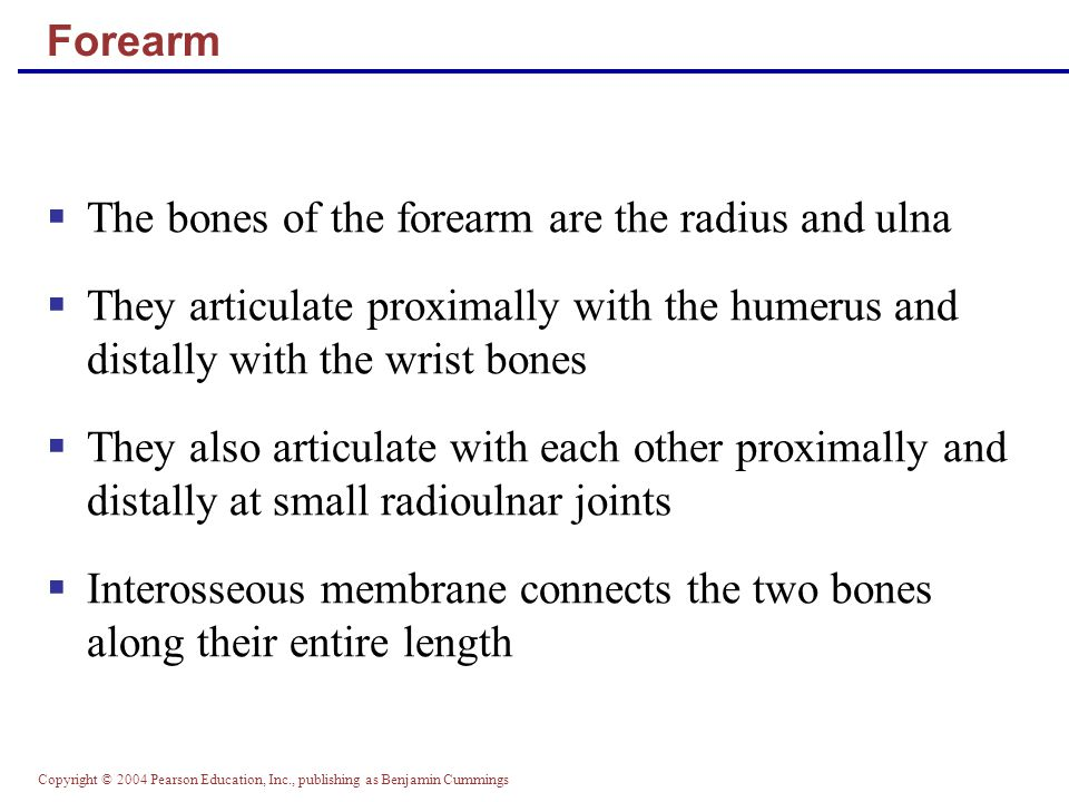 The bones of the forearm are the radius and ulna