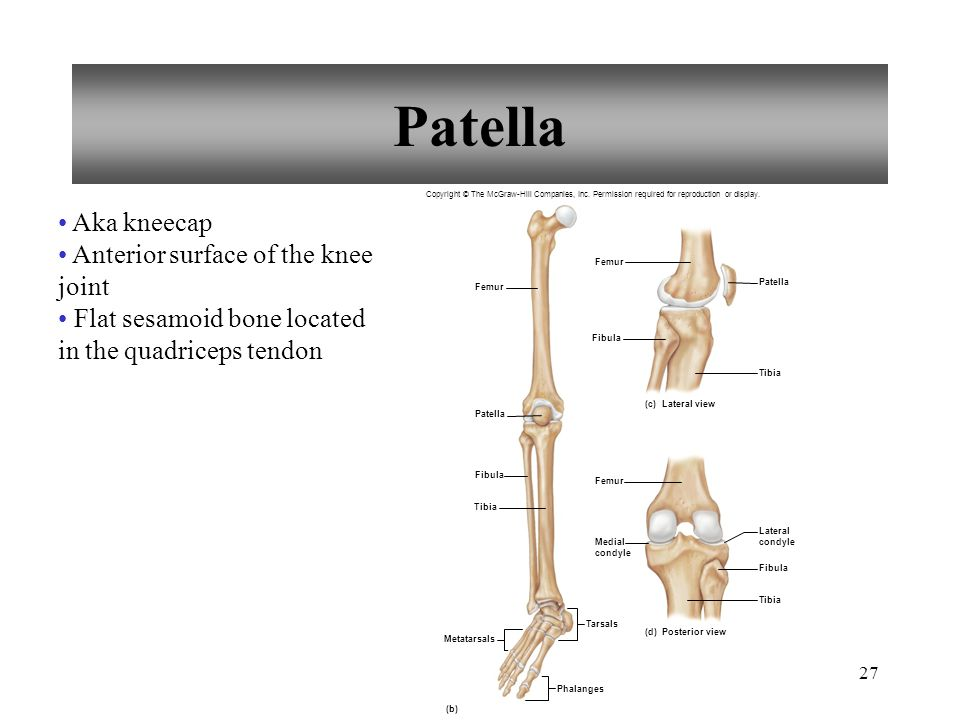 Patella Aka kneecap Anterior surface of the knee joint