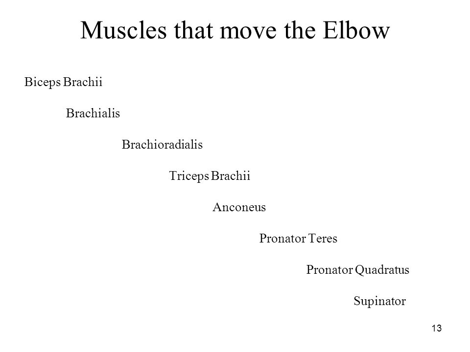 Muscles that move the Elbow