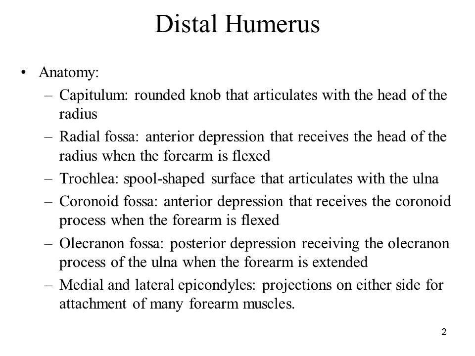 Distal Humerus Anatomy: