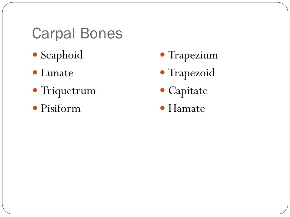 Carpal Bones Scaphoid Lunate Triquetrum Pisiform Trapezium Trapezoid