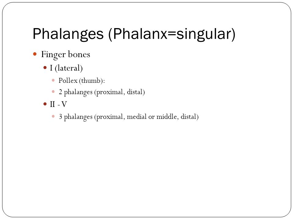 Phalanges (Phalanx=singular)