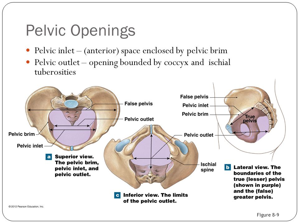 Pelvic Openings Pelvic inlet – (anterior) space enclosed by pelvic brim. Pelvic outlet – opening bounded by coccyx and ischial tuberosities.