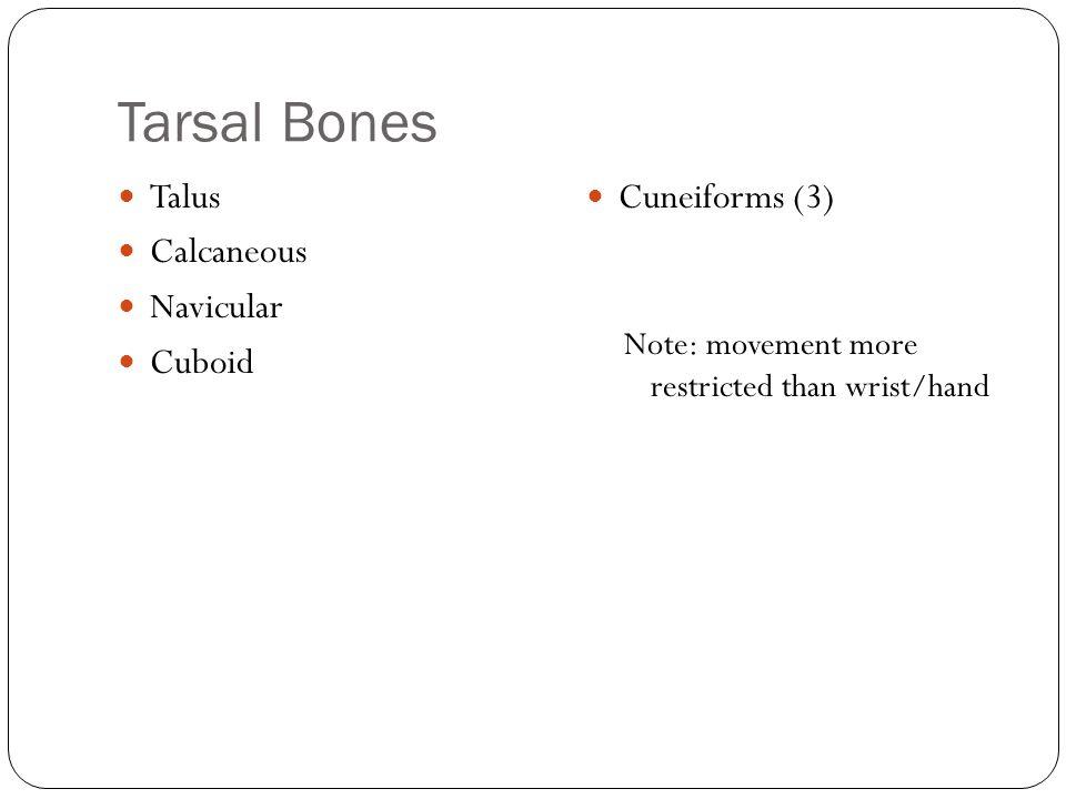 Tarsal Bones Talus Calcaneous Navicular Cuboid Cuneiforms (3)