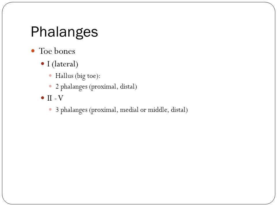 Phalanges Toe bones I (lateral) II - V Hallus (big toe):