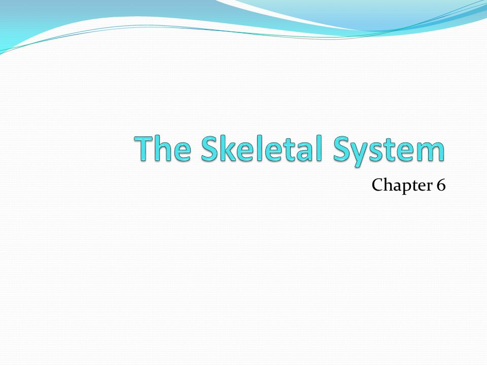 The Skeletal System Chapter 6