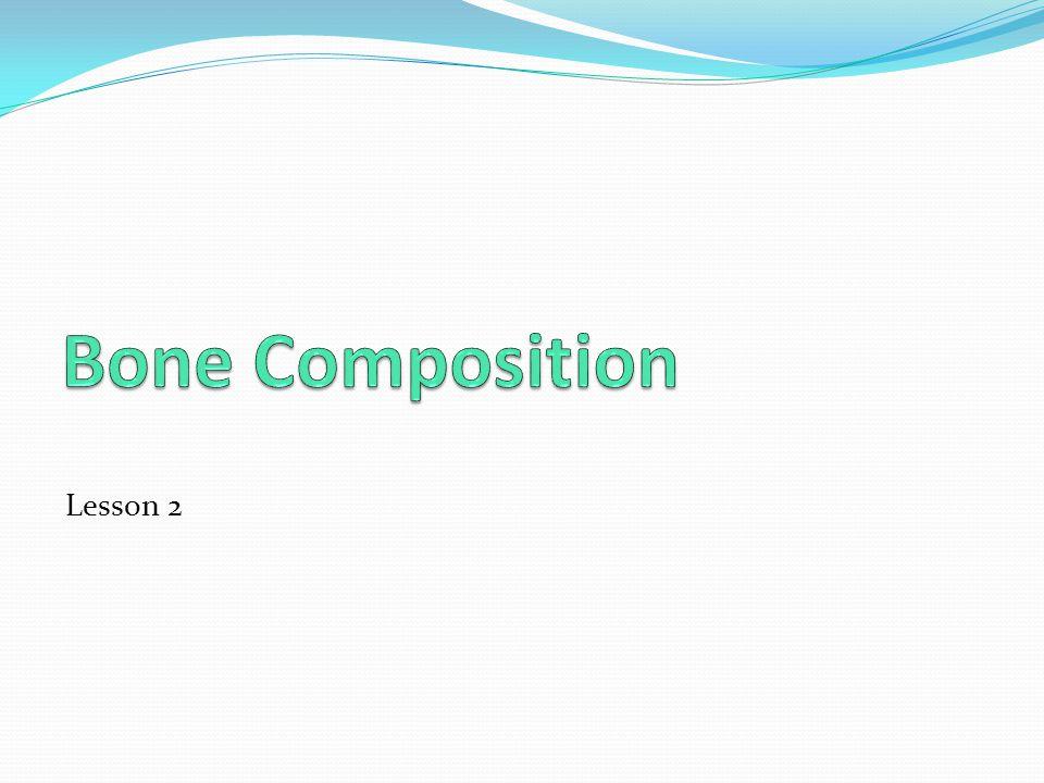 Bone Composition Lesson 2