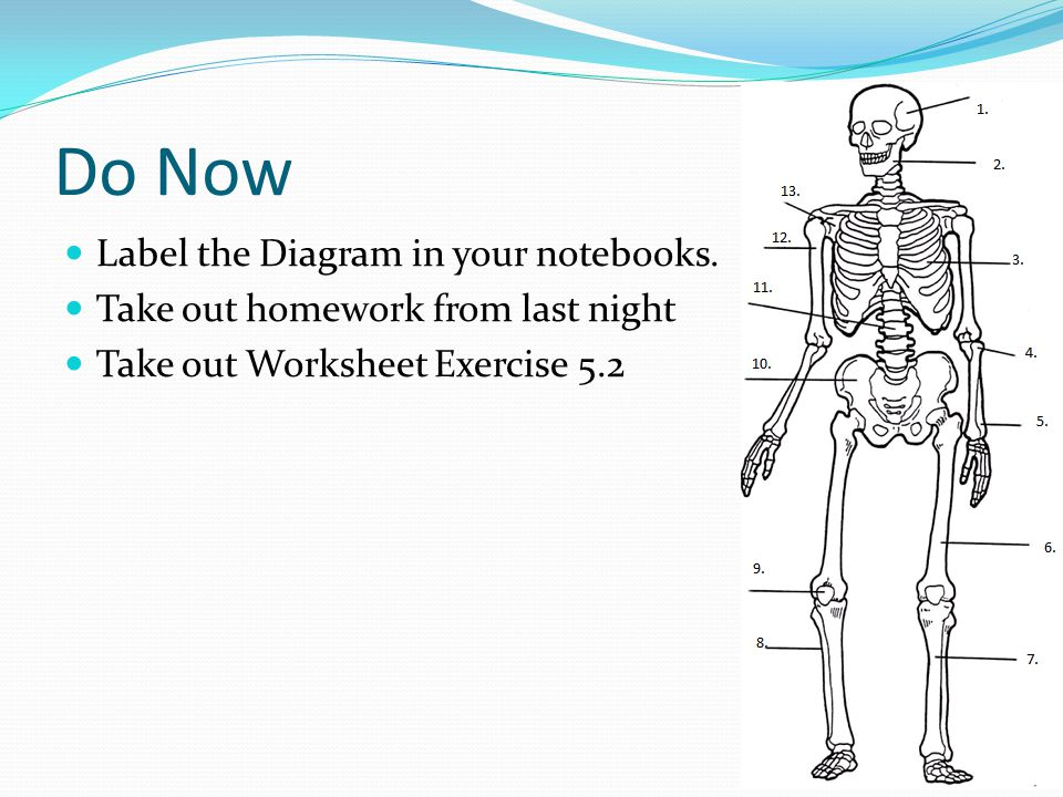 Do Now Label the Diagram in your notebooks.
