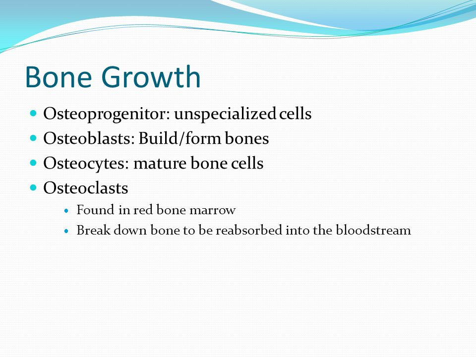 Bone Growth Osteoprogenitor: unspecialized cells