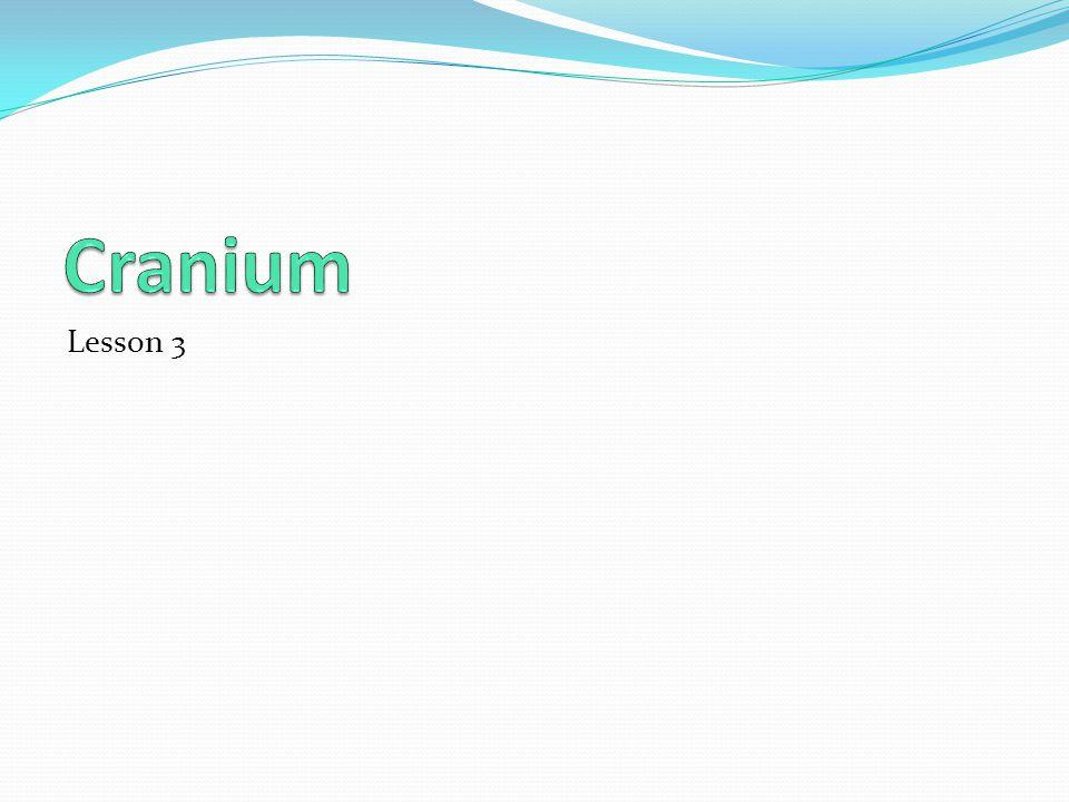 Cranium Lesson 3