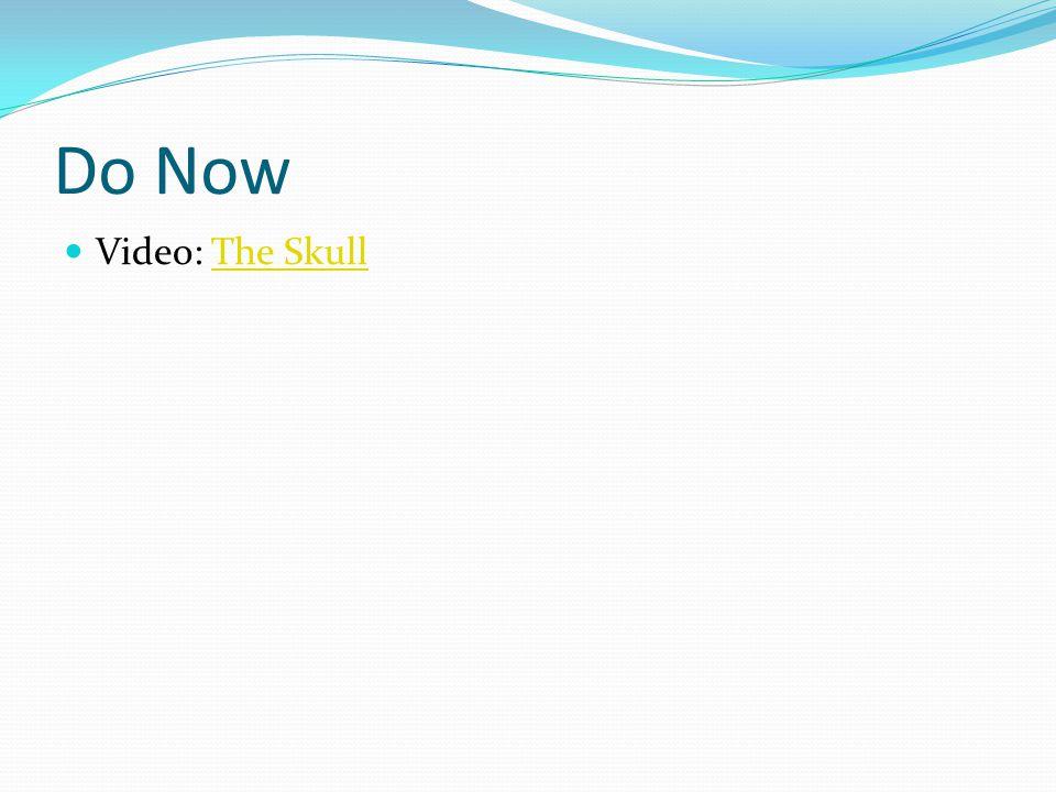 Do Now Video: The Skull