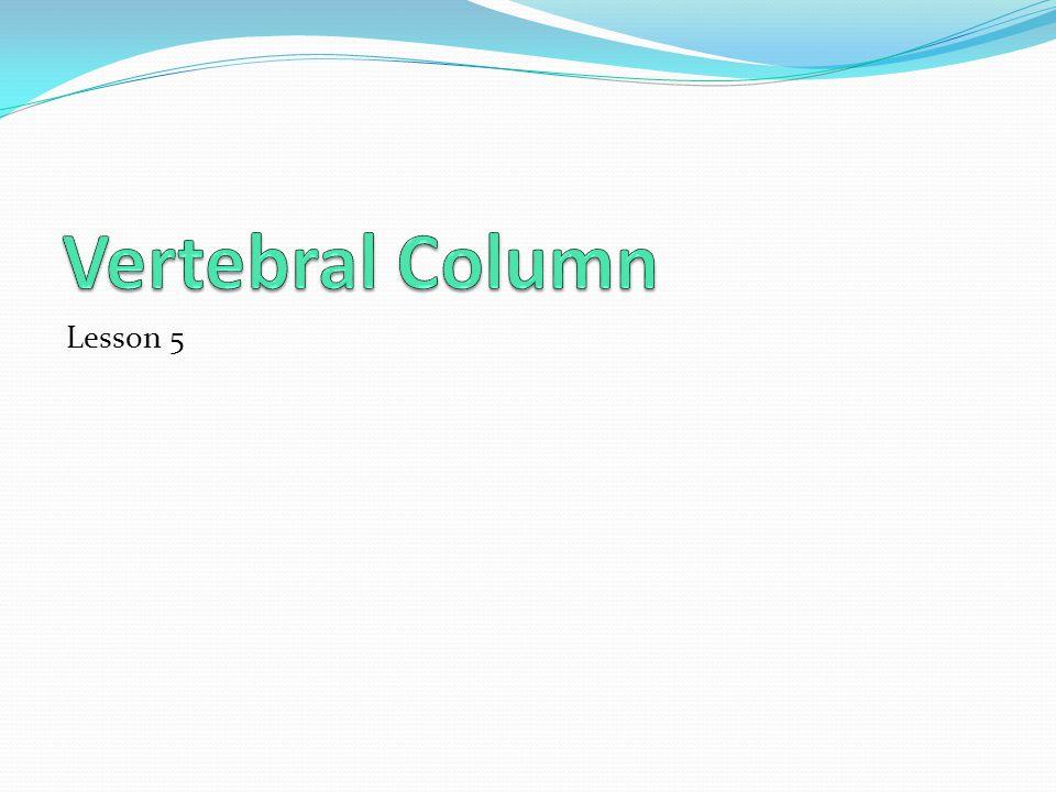 Vertebral Column Lesson 5