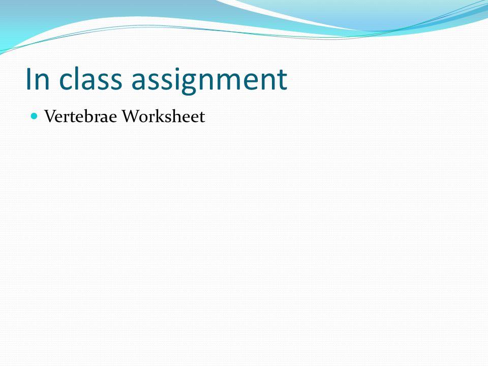 In class assignment Vertebrae Worksheet