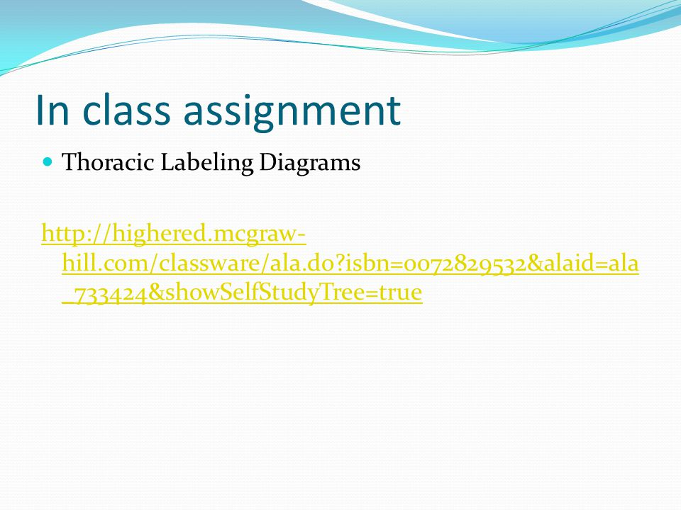 In class assignment Thoracic Labeling Diagrams