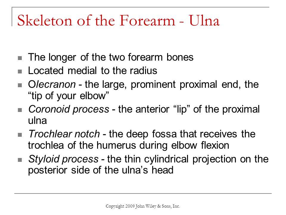 Skeleton of the Forearm - Ulna
