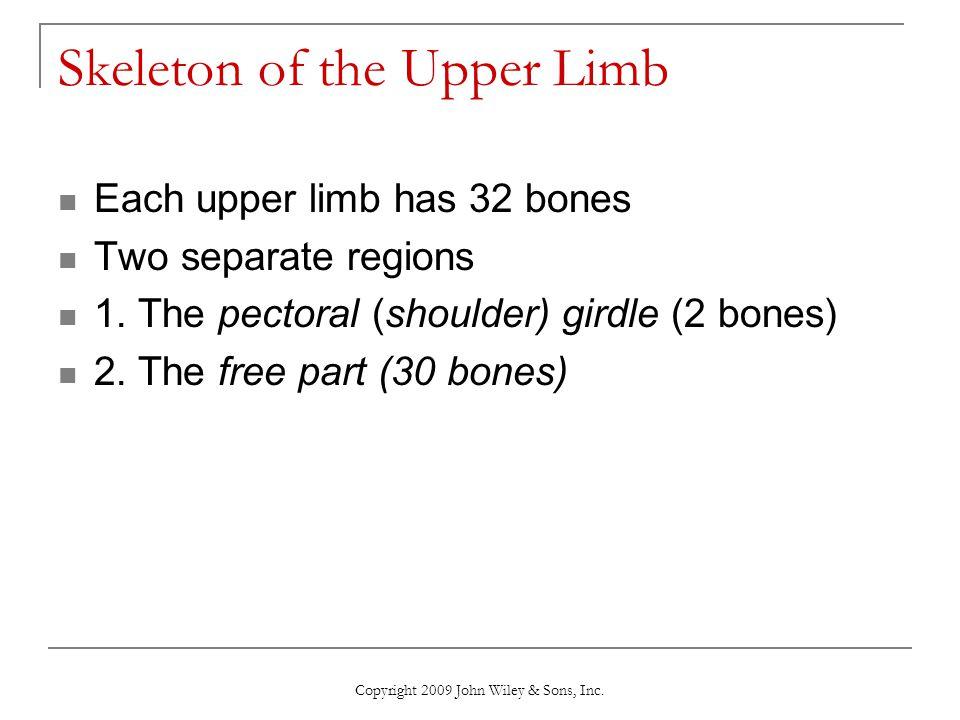 Skeleton of the Upper Limb
