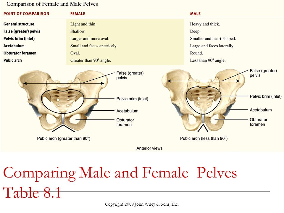 Comparing Male and Female Pelves Table 8.1