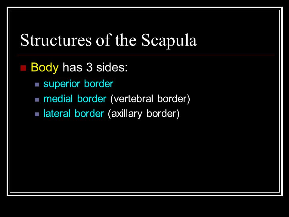 Structures of the Scapula
