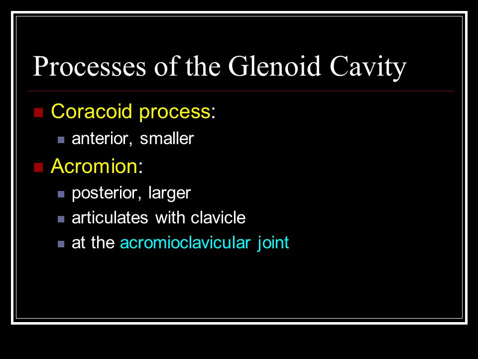 Processes of the Glenoid Cavity