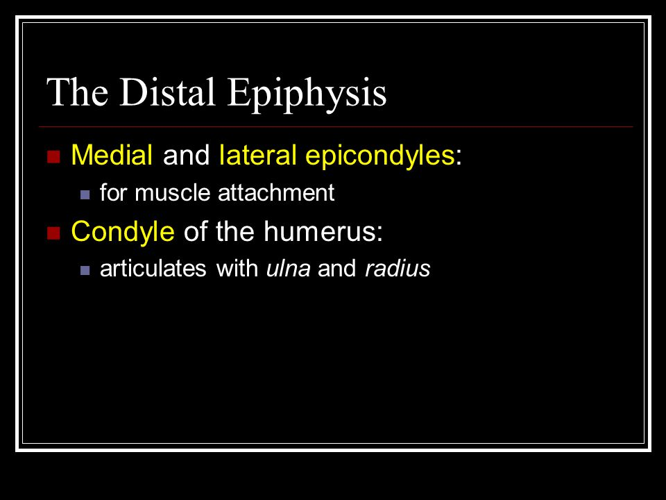 The Distal Epiphysis Medial and lateral epicondyles: