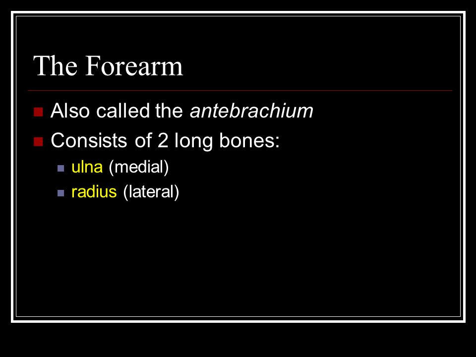 The Forearm Also called the antebrachium Consists of 2 long bones:
