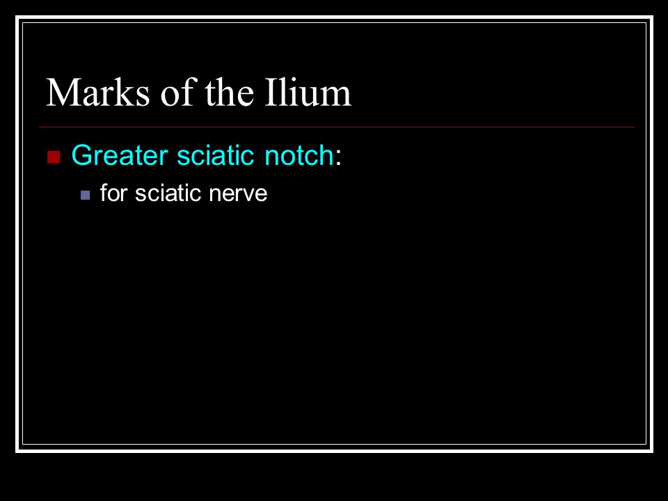 Marks of the Ilium Greater sciatic notch: for sciatic nerve