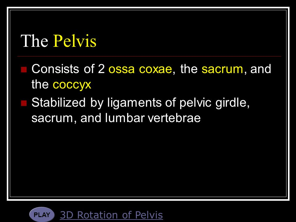 The Pelvis Consists of 2 ossa coxae, the sacrum, and the coccyx
