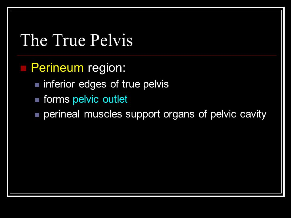 The True Pelvis Perineum region: inferior edges of true pelvis