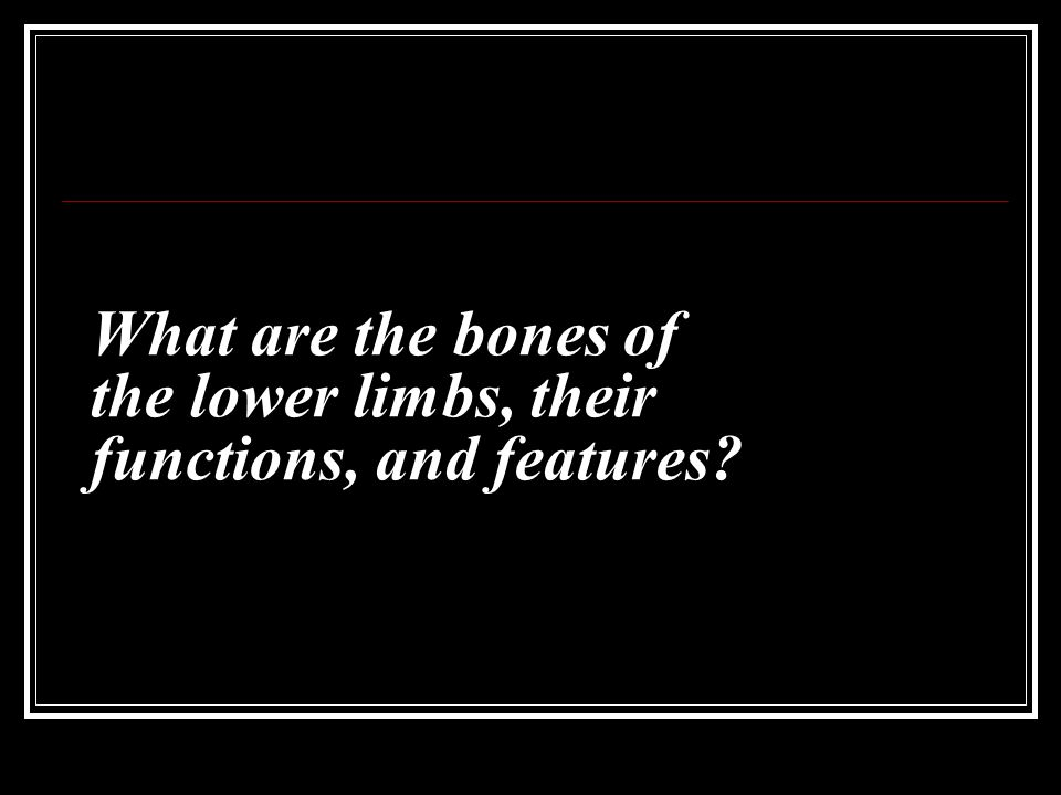 What are the bones of the lower limbs, their functions, and features