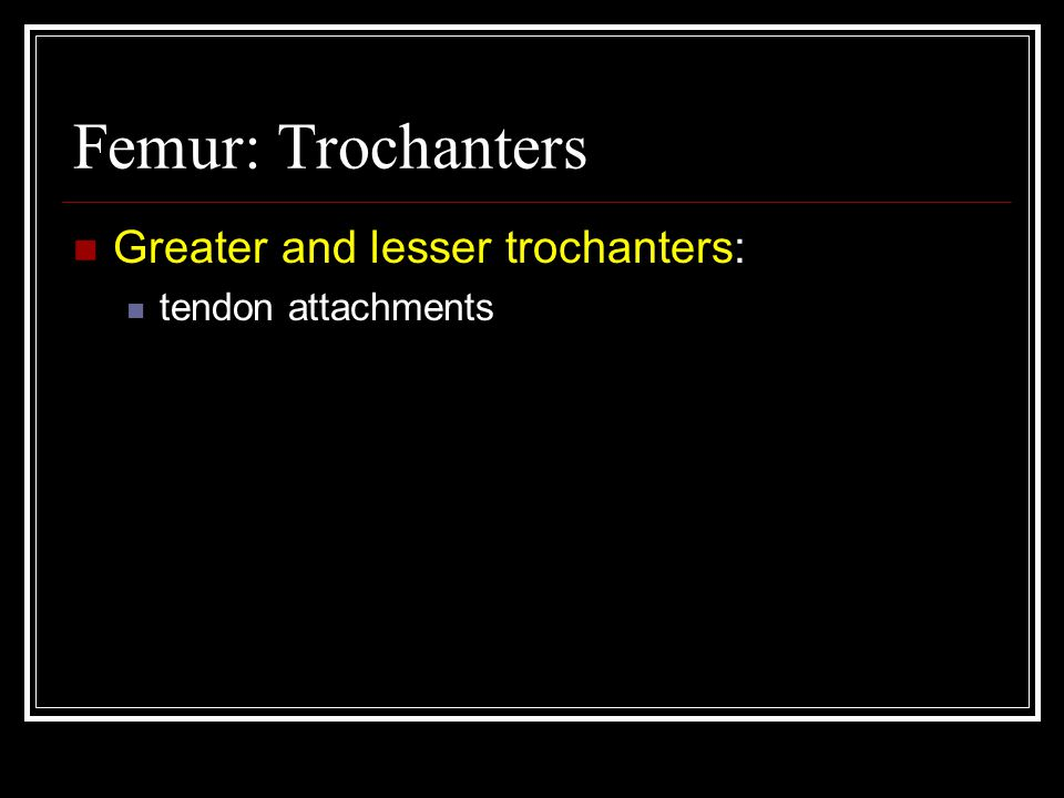 Femur: Trochanters Greater and lesser trochanters: tendon attachments