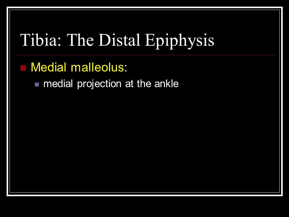Tibia: The Distal Epiphysis
