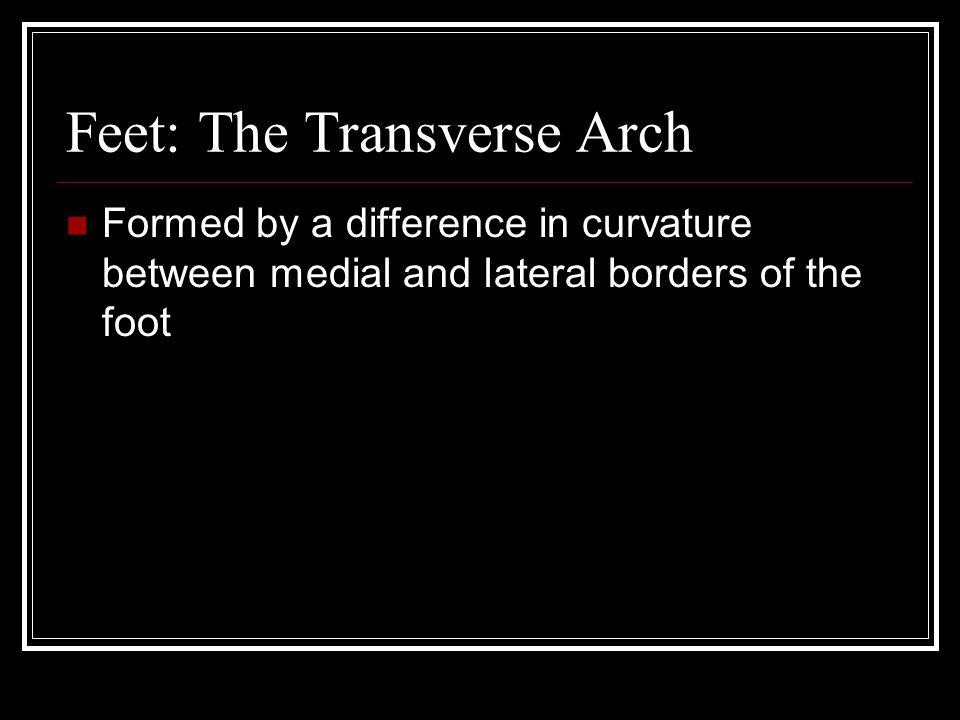 Feet: The Transverse Arch