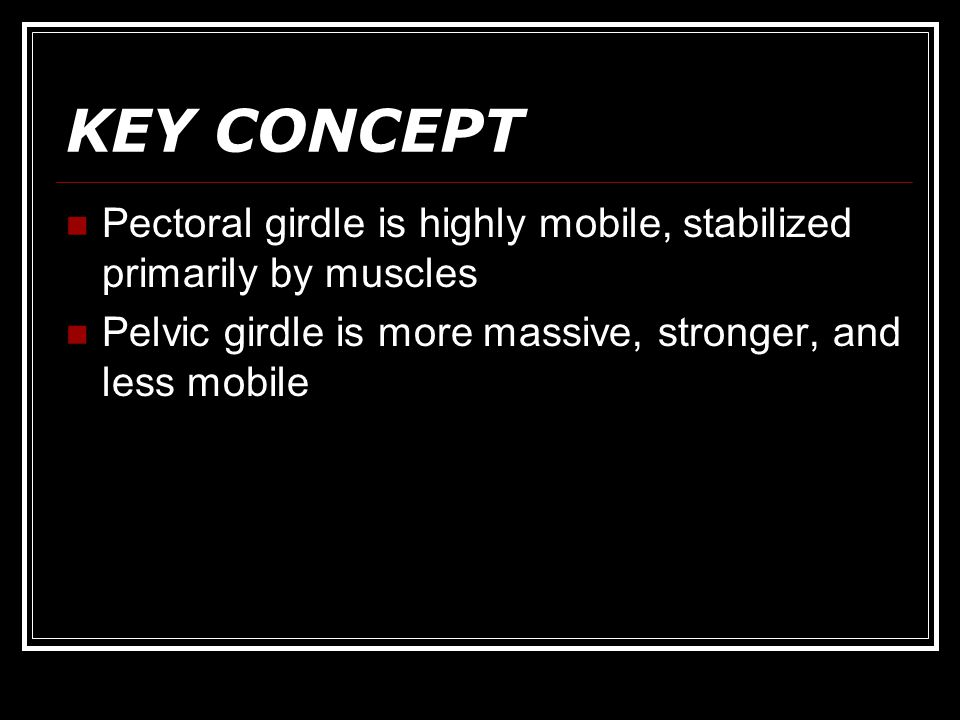 KEY CONCEPT Pectoral girdle is highly mobile, stabilized primarily by muscles.