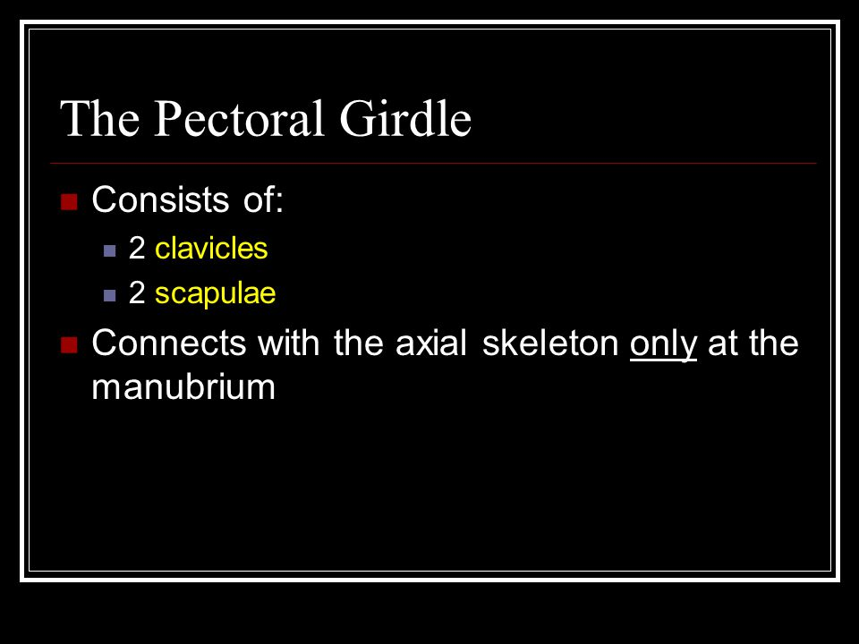 The Pectoral Girdle Consists of: