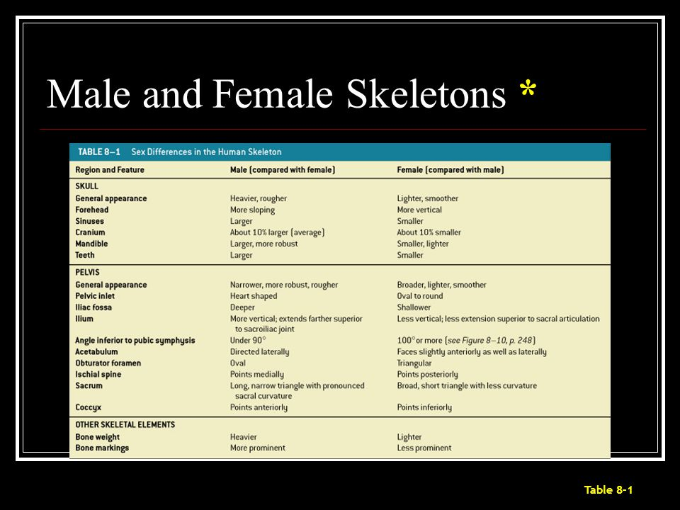 Male and Female Skeletons *