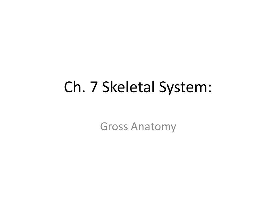 Ch. 7 Skeletal System: Gross Anatomy